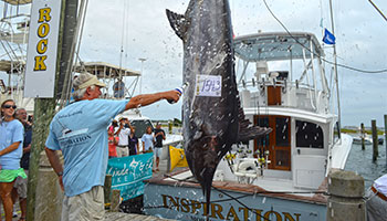 Largest Blue Marlin
