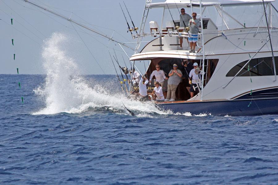 Abacos marlin