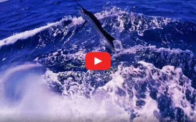 Get Ready for the 62nd Annual Big Rock Blue Marlin Tournament